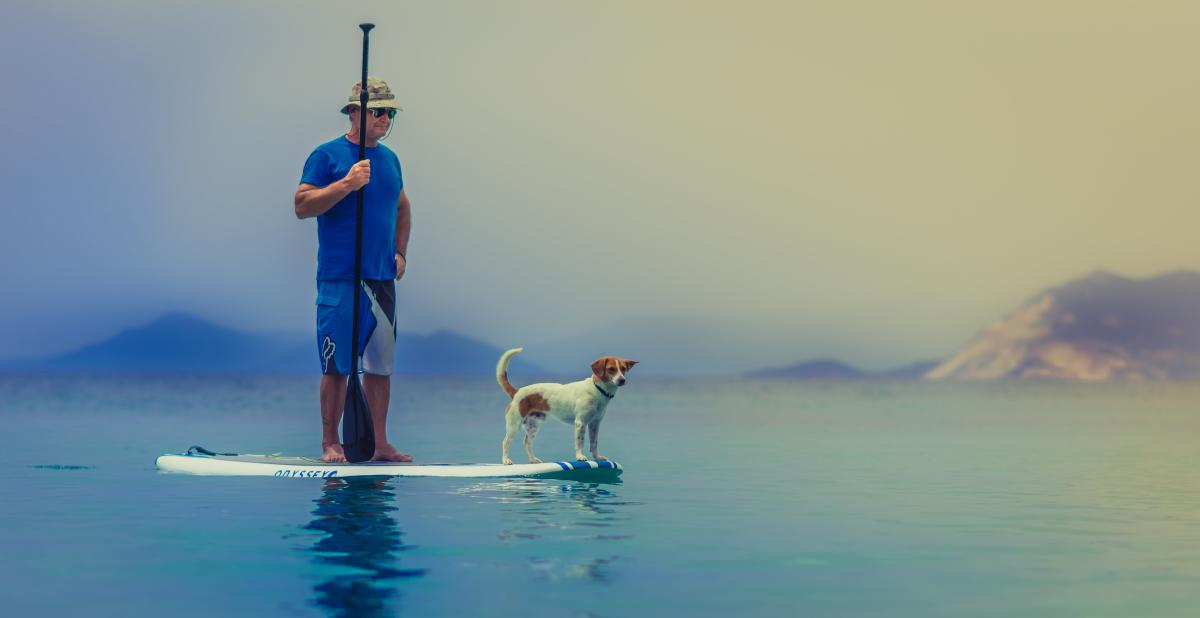 Stock paddleboard with dog