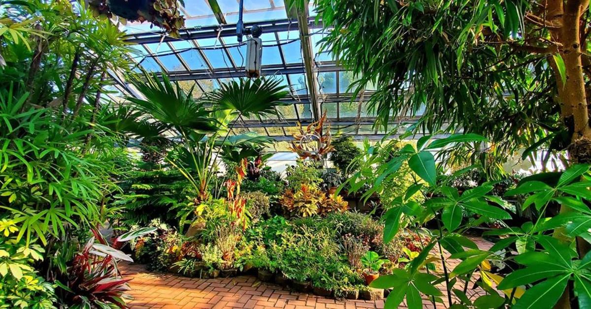 A lush display of tropical plants in the conservatory of Dow Gardens in Midland