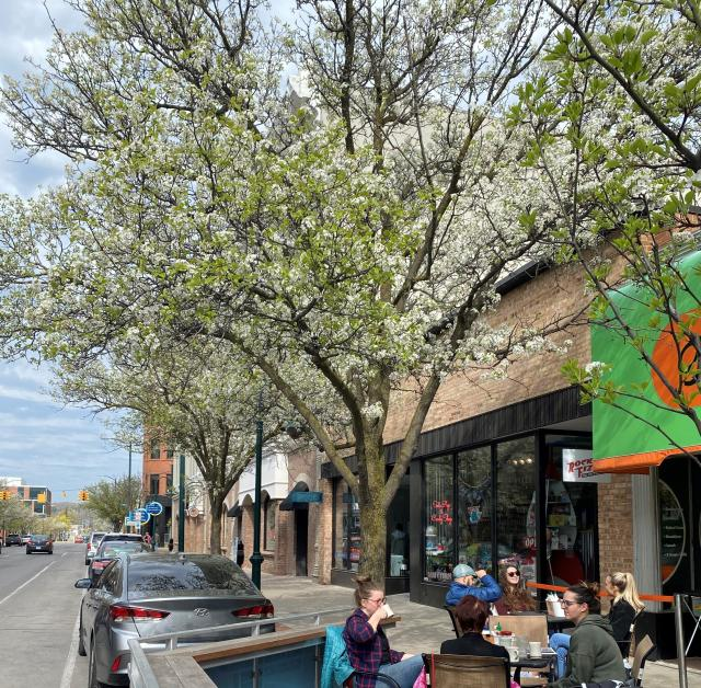 Blossoms in Downtown Traverse City