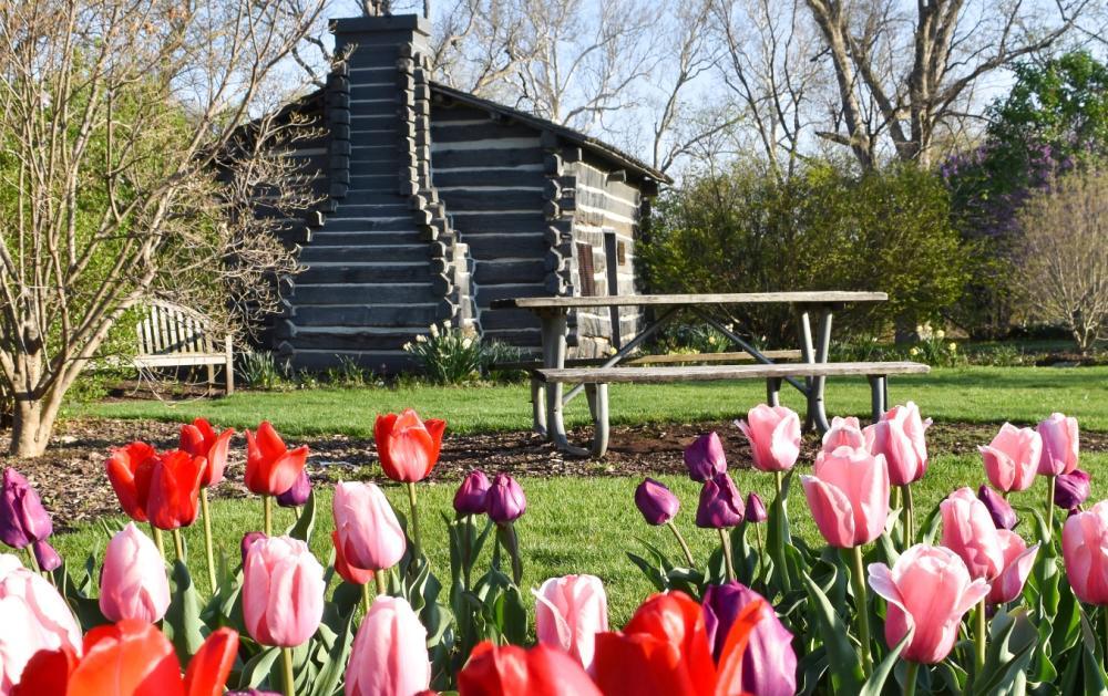 Foster Park Spring Flowers