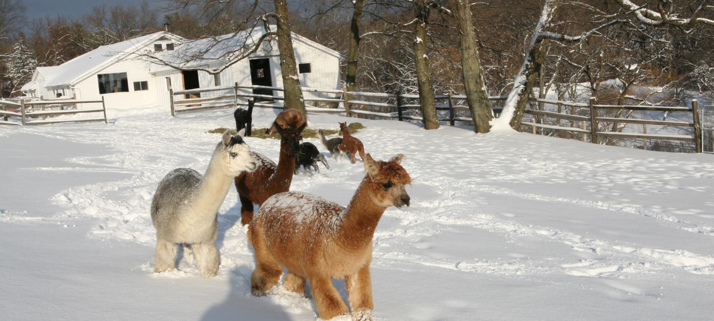 Faraway Snow