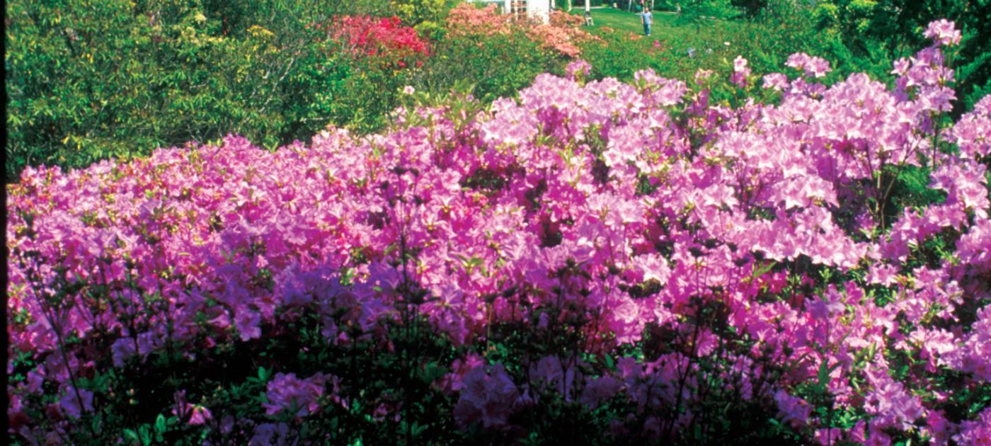 Lasdon in Spring