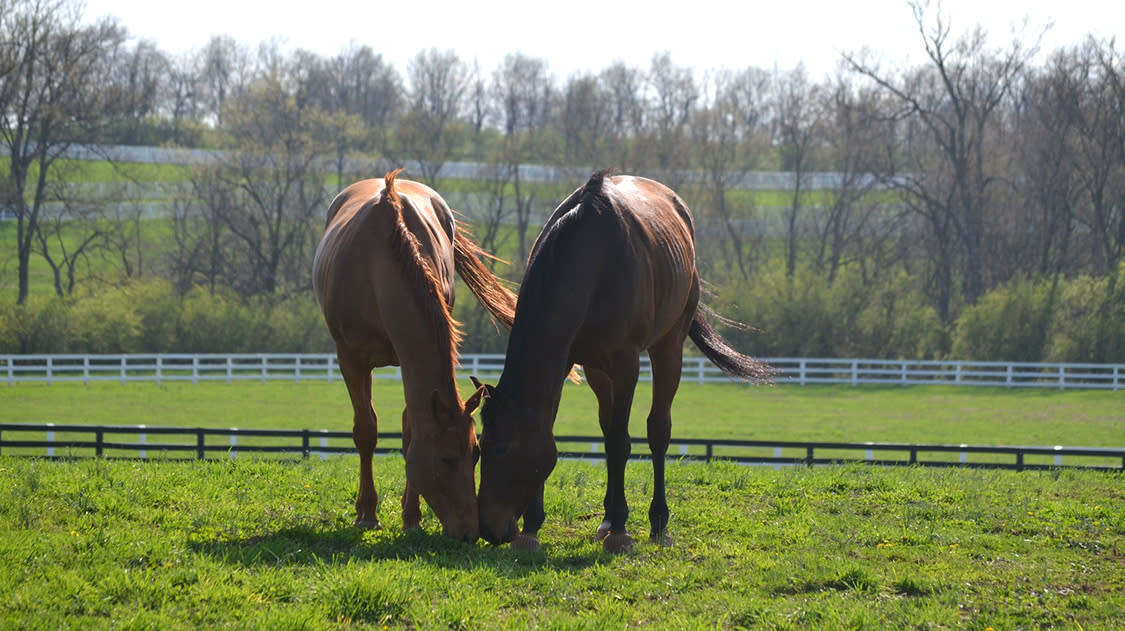 Two horses standing in a field at The Secretariat Center