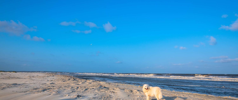 Golden Isles Pet Friendly Activities | Beaches & Restaurants