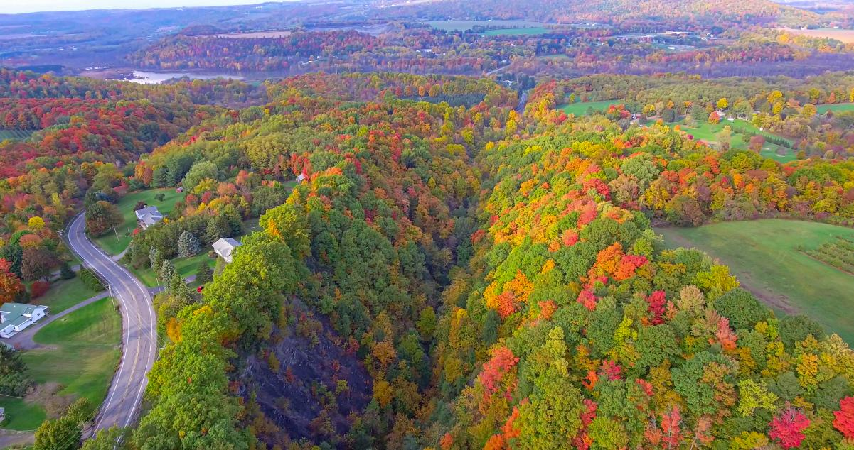 Scenic Fall Leaves and Landscape above Highland Forest