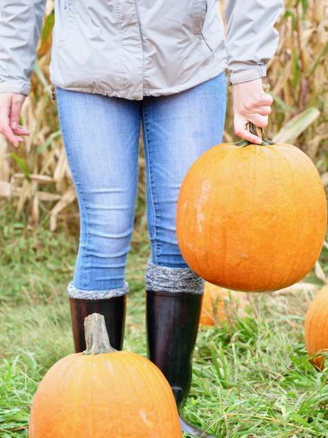 Pumpkins from Discover Fall in Albany video