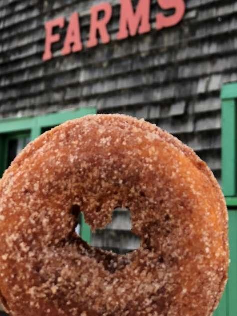 Doughnut at Indian Ladder Farms