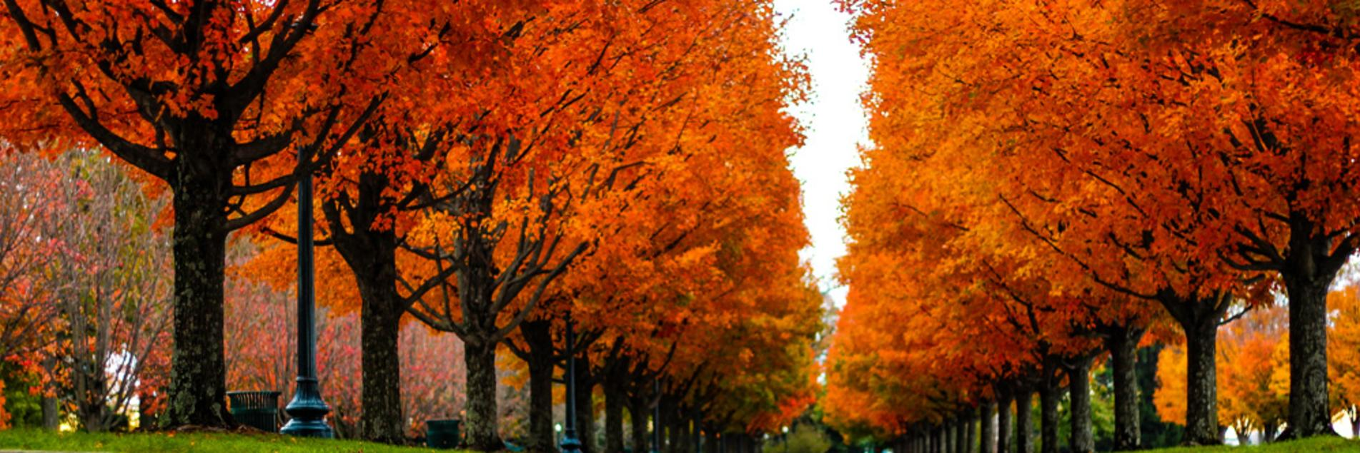 Fall in Lexington, Kentucky