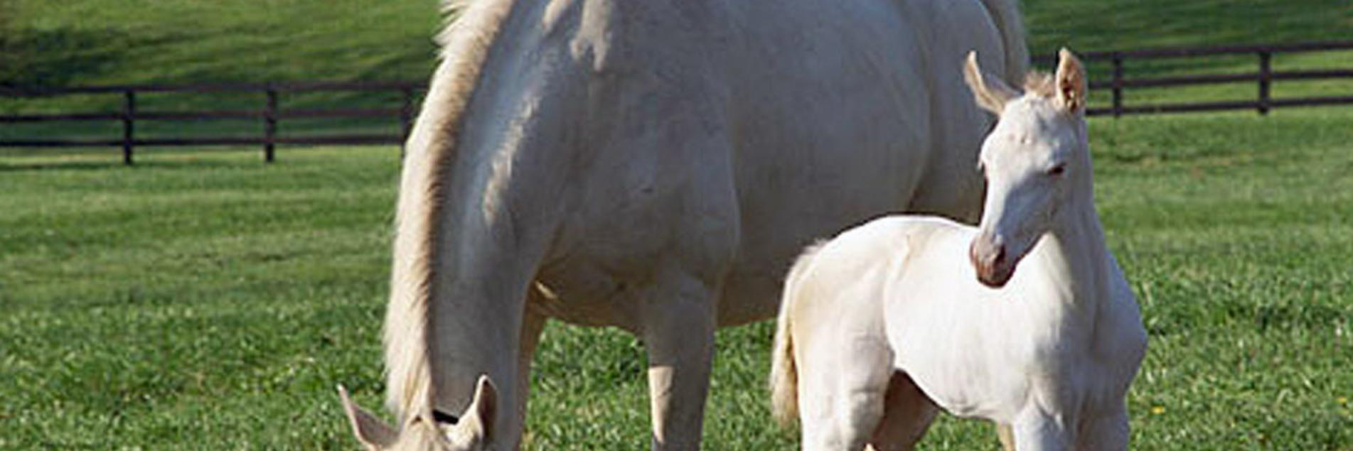 Whats New White Foal