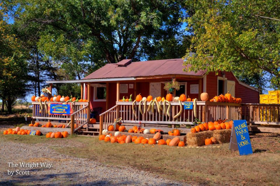 Meadowlark Farm pumpkins and gourds on display.