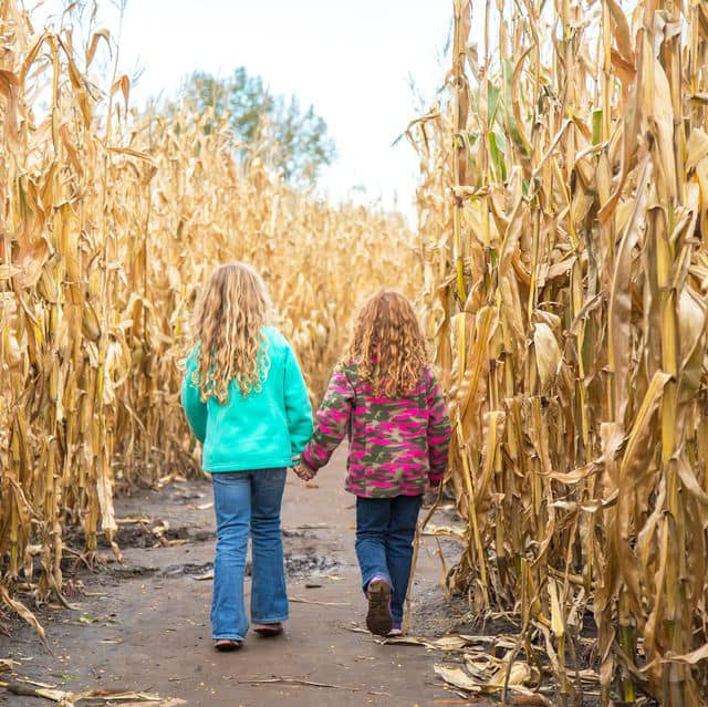 Two children in the corn field at Stokoe Farms