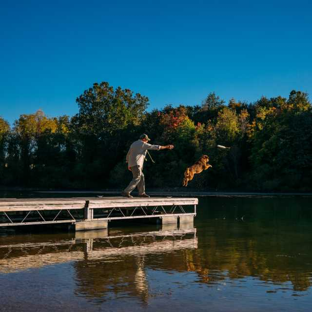 A man tosses a toy off the end of the dock, with a brown dog leaping into the water to retrieve it