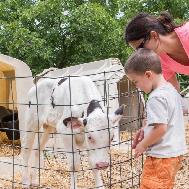 Perrydell Farm