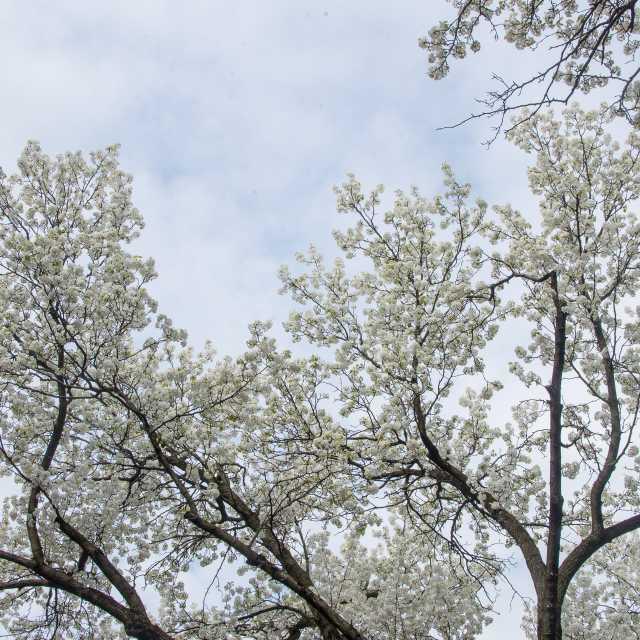 York County Spring 2014 07