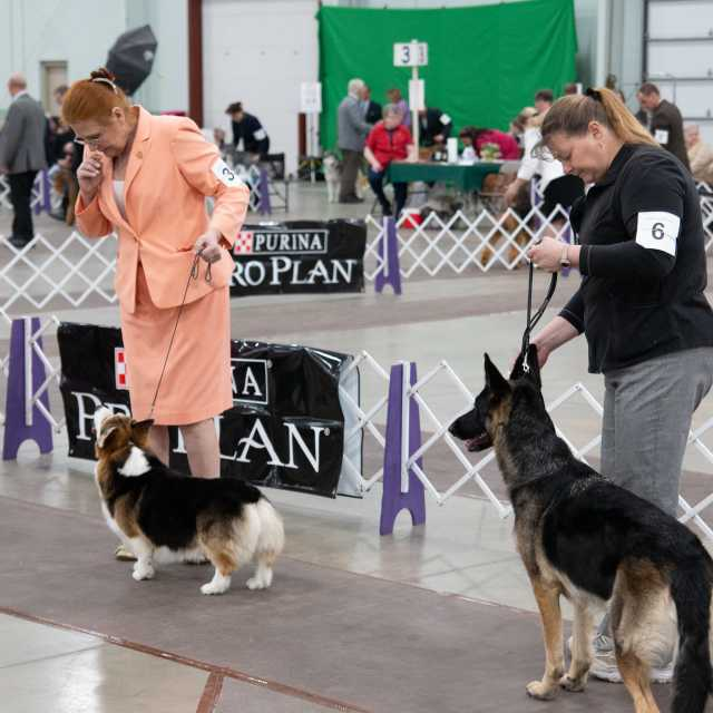 celtic classic- dog show