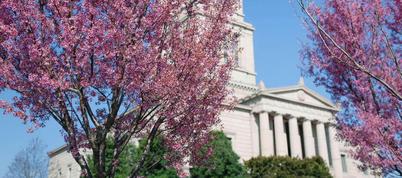 Spring in Alexandria 2