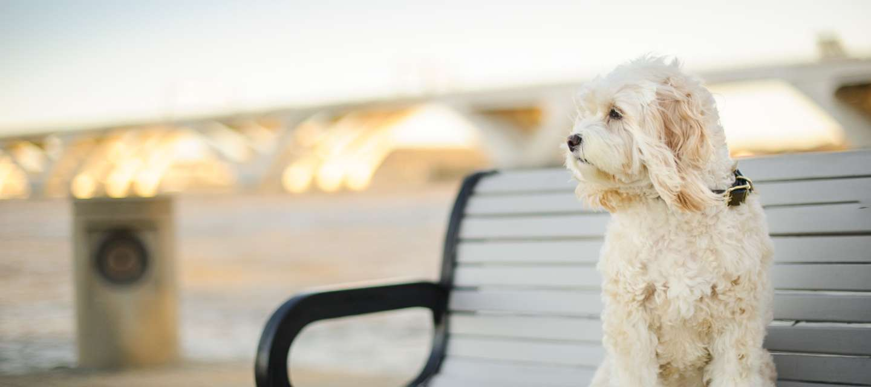 Dog on park bench
