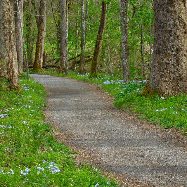 Best Spring Hikes in Asheville, N.C.