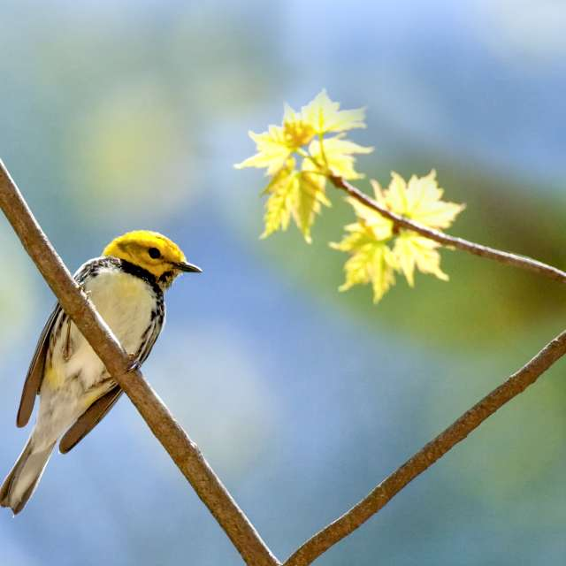 8 Places to Bird Watch in Asheville, N.C.