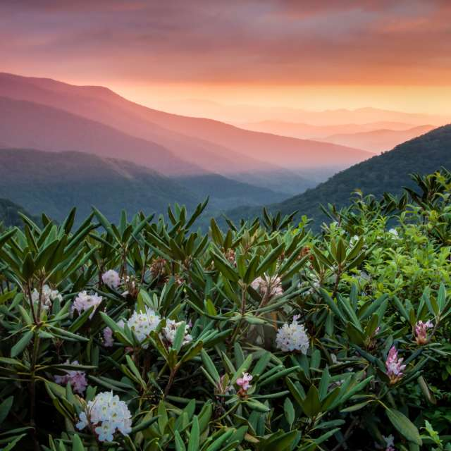 Experience Asheville, Anywhere
