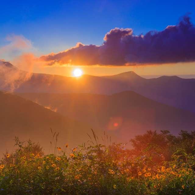 Asheville's Wildflower Bloom Schedule