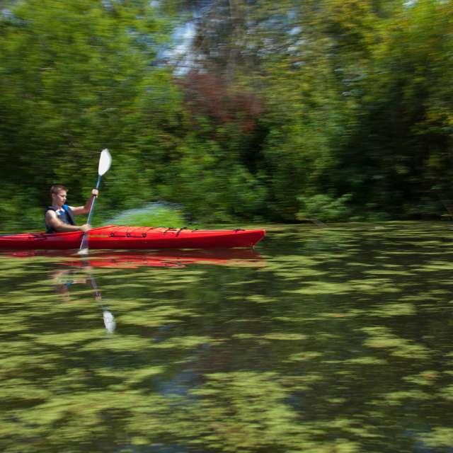 Kayaking on Mercer Slough