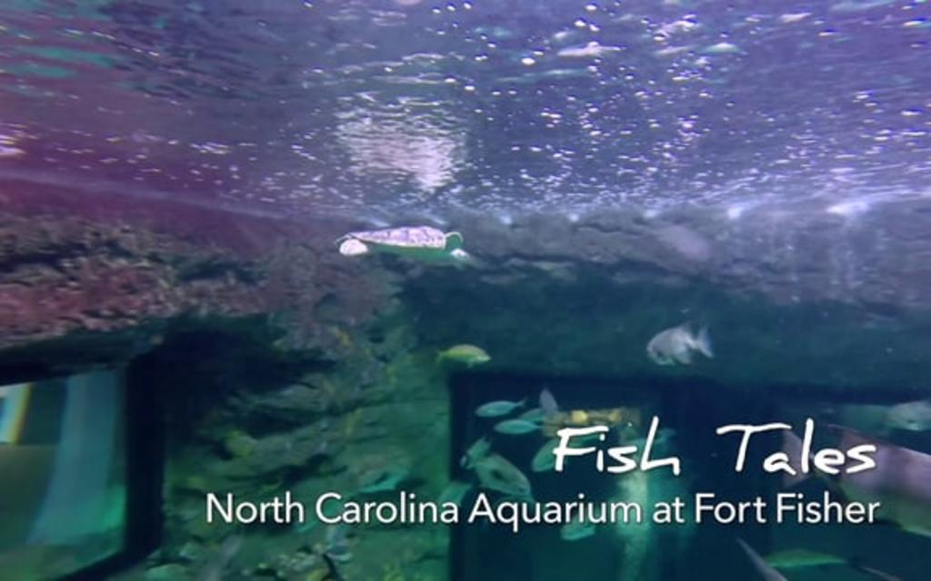 Go With the Flow....NC Aquarium at Fort Fisher