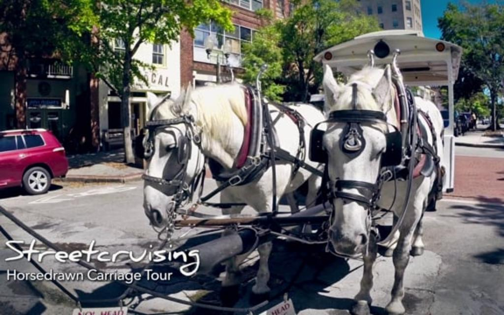 Go With the Flow....Horse-Drawn Carriage