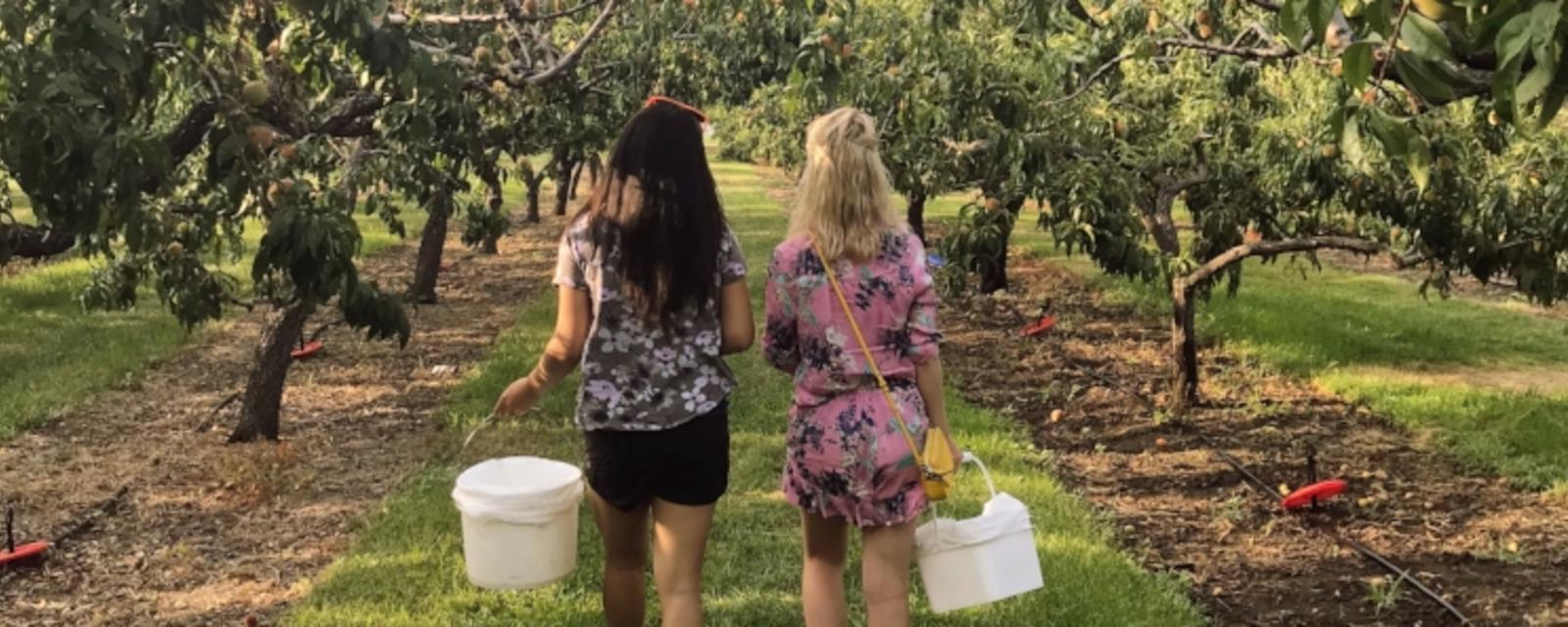 Pick Fruit At These U Pick Farms In Kelowna