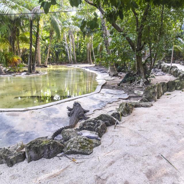 Crococún