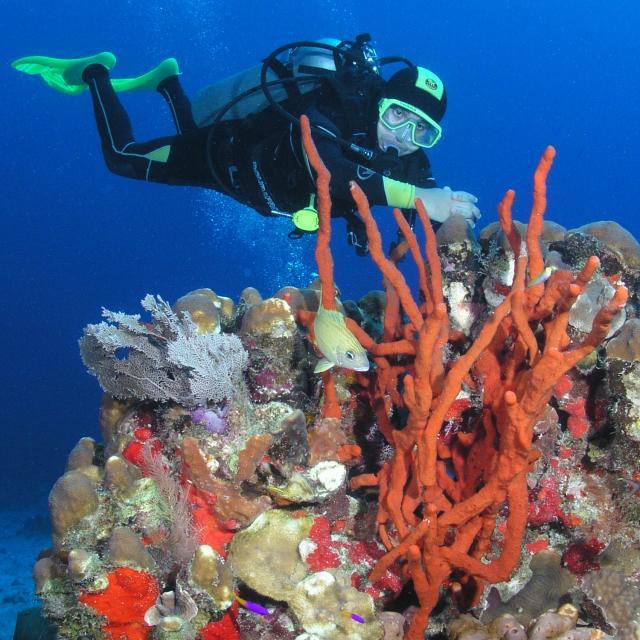 Scuba Diver and Coral