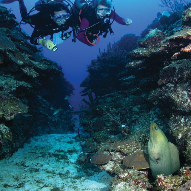 Scuba Divers and Eel