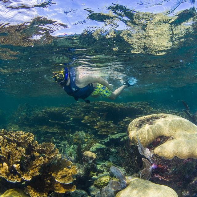 Snorkeler above Coral Reef