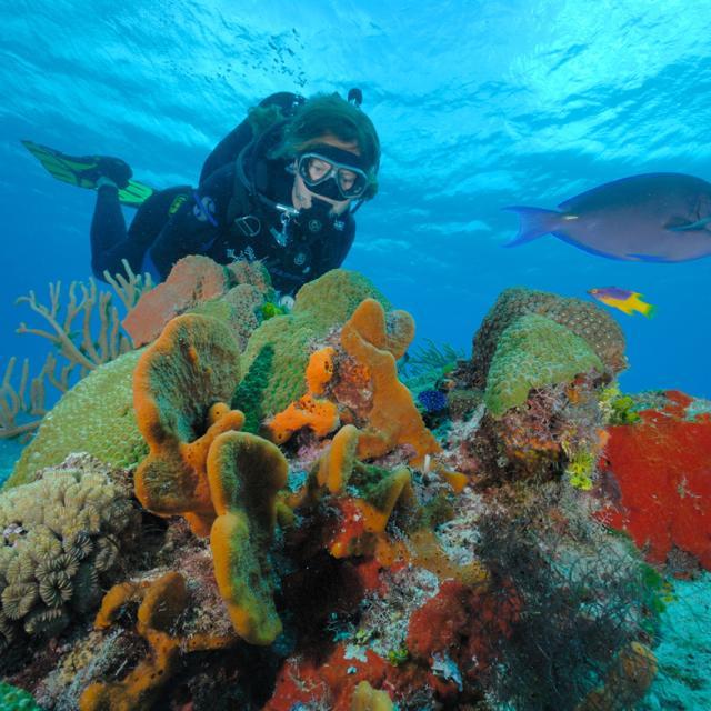 Buceo Cozumel