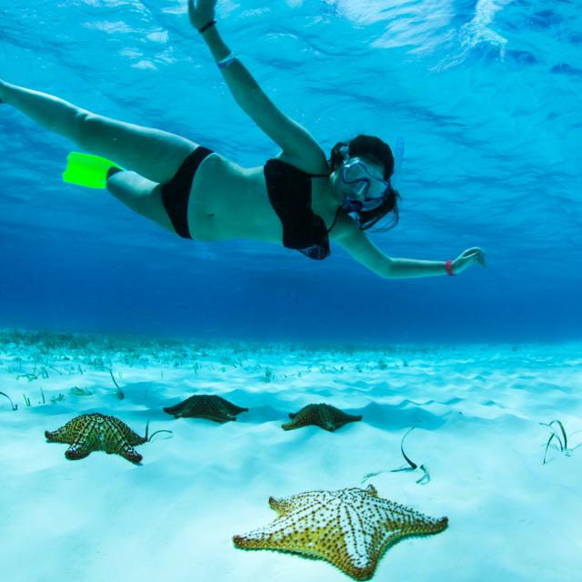 Woman Snorkeling above Starfish