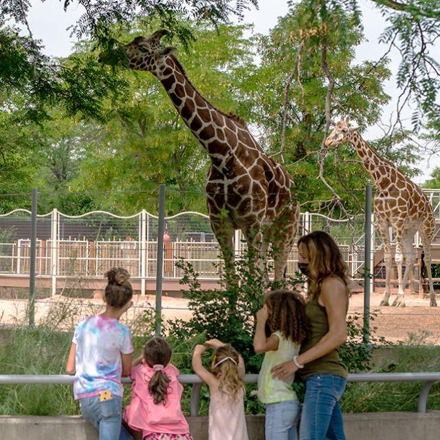 Family at Denver Zoo