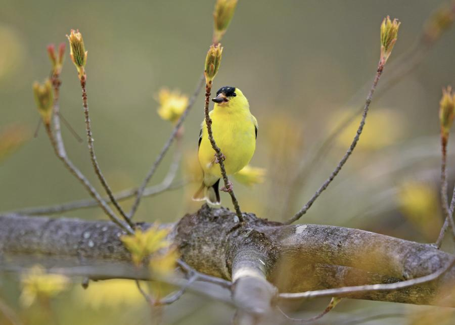 Birds of Bucks County blog