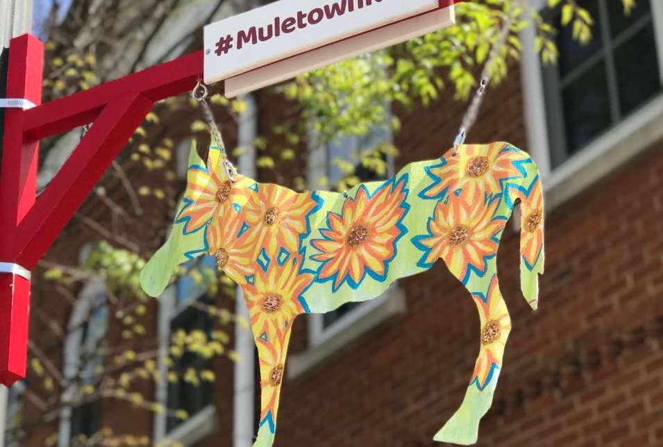 Mule Sunflower