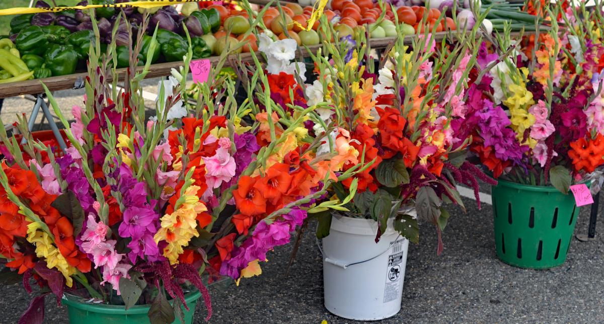 Farmers Market - McCutcheon/Mount Vernon