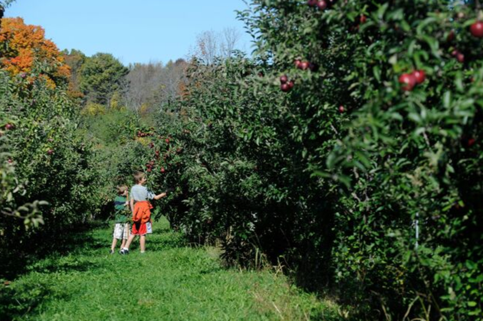Children picking apples in New York State