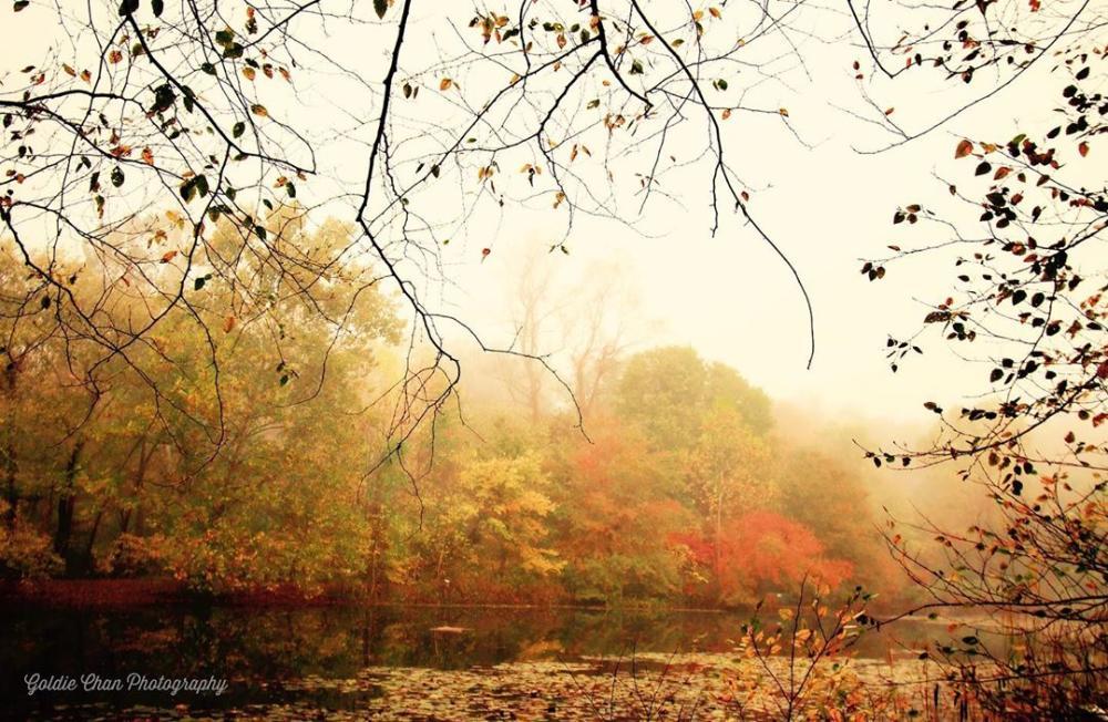 Ellanor C Lawrence Park