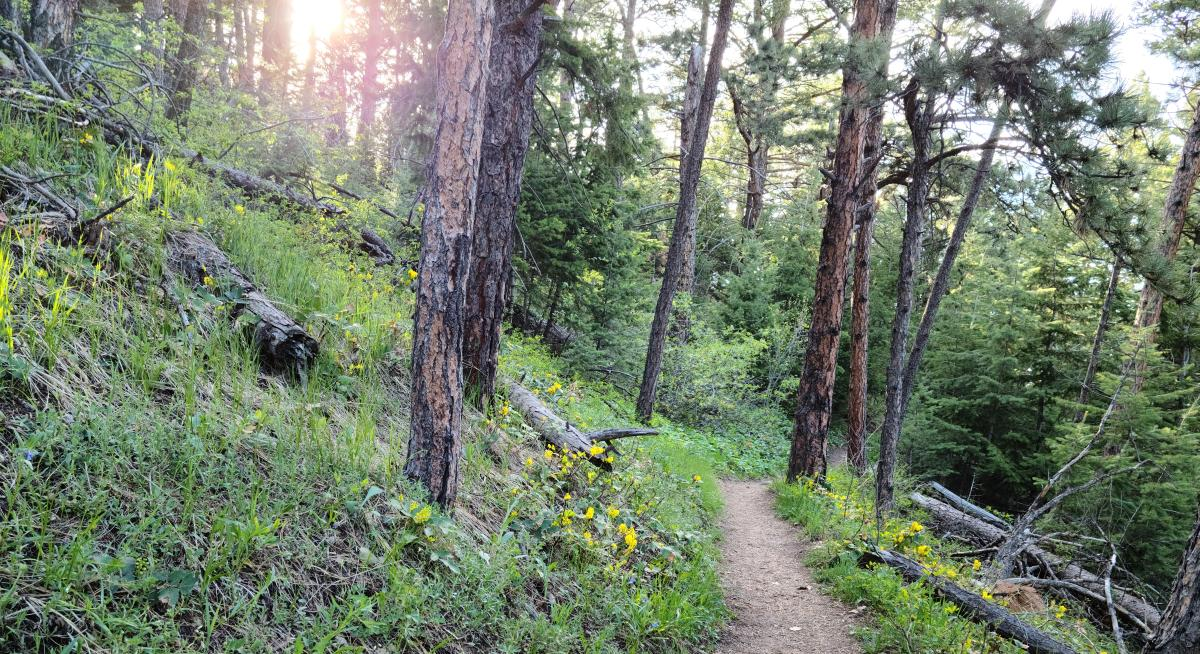 E.M. Greenman Trail