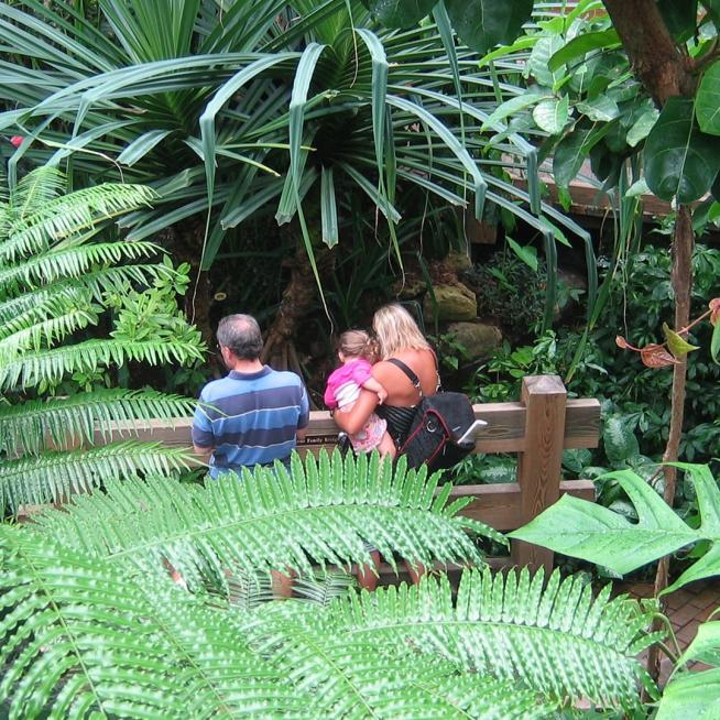 A family stands on a bridge amidst tropical plants at Olbrich Botanical Gardens