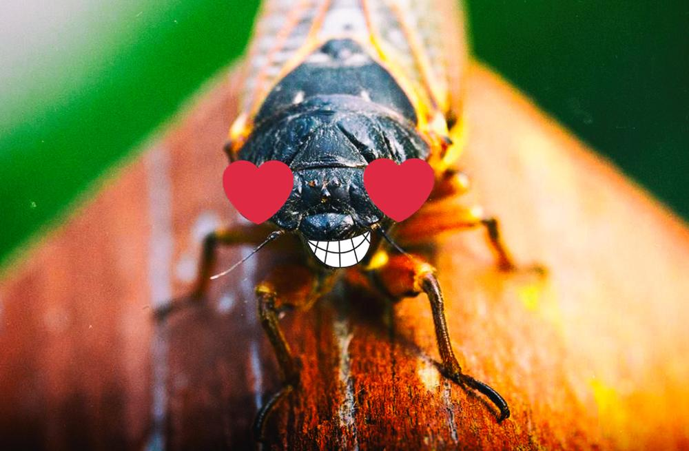 Cicada Heart Eyes With Smile