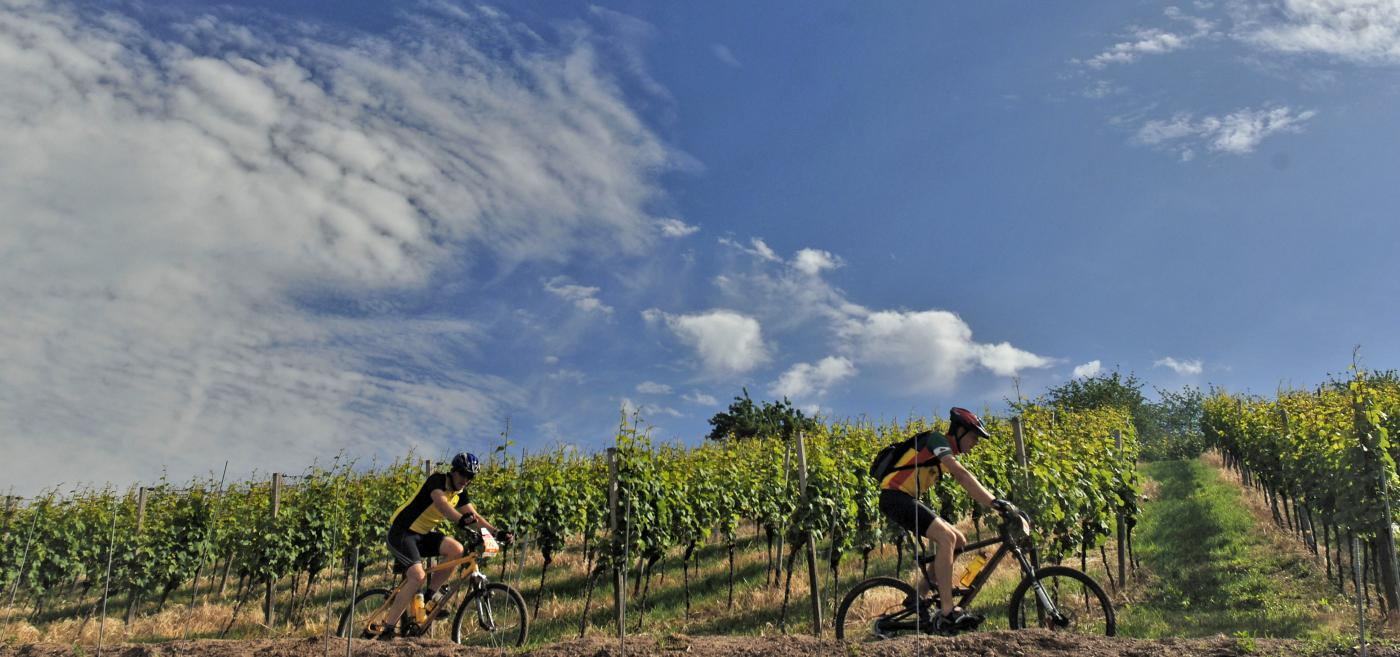 Biking through Gibbston Valley Winery