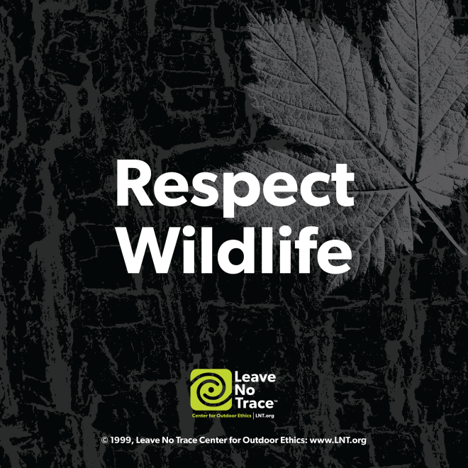 Leave No Trace - Respect Wildlife