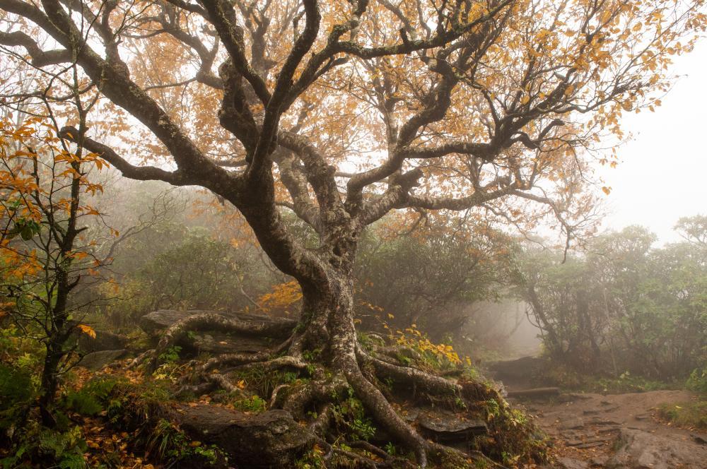 Fall color at Craggy Gardens near Asheville, NC