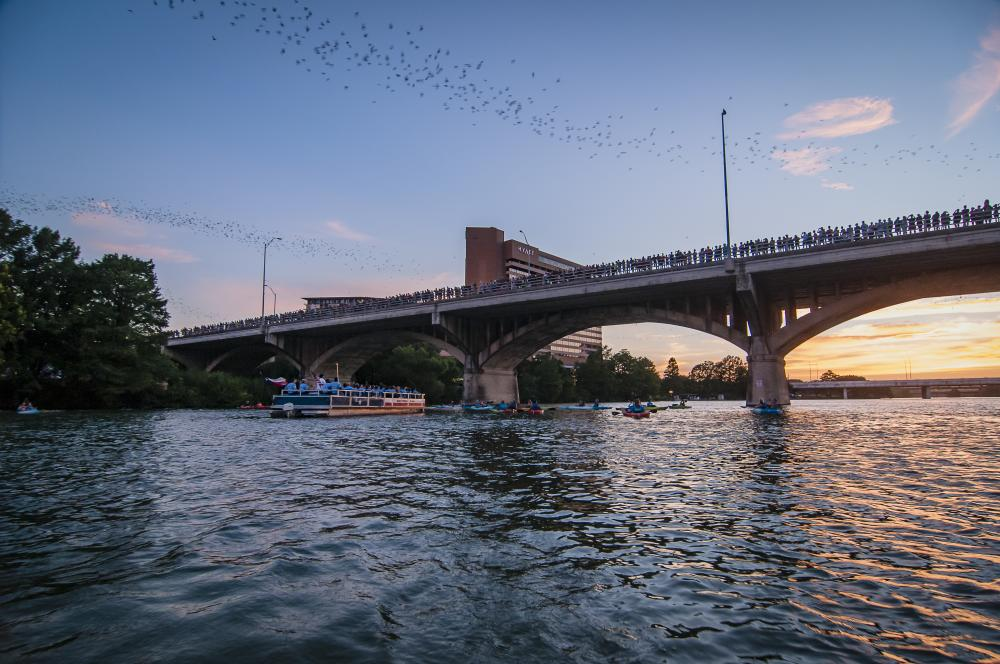 Photo of Rowing Dock kayakers and a boat on Lady Bird Lake. Above them, the bats fly out from the Congress Avenue Bridge at sunset