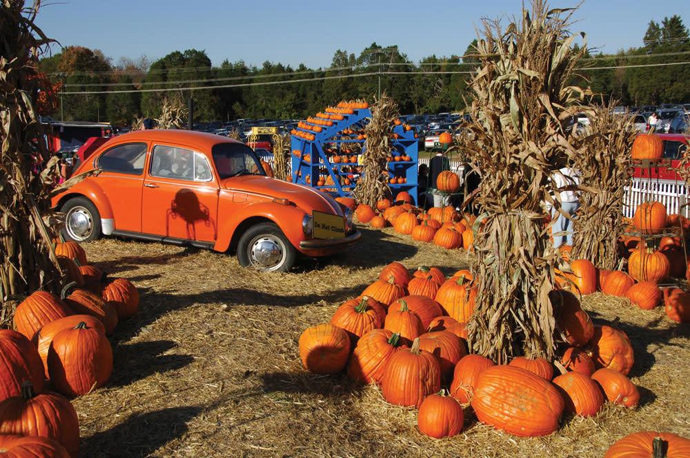 Cox Farms pumpkin patch