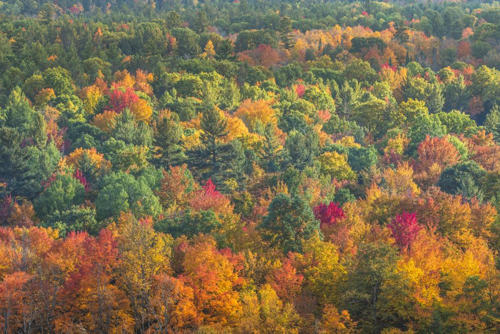 An aerial photo of the colorful fall foliage in Traverse City, MI.